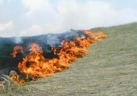 пожежа трава