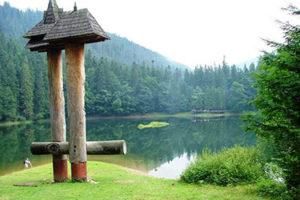 Двох мешканців Міжгірщини судитимуть за порубку дерев у заповіднику